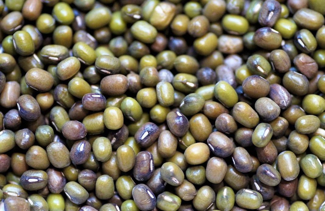 mungo fazolky